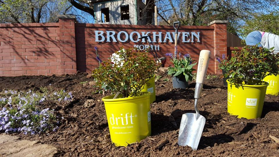 Potted flower with small trowel stuck in dirt at neighborhood entrance.